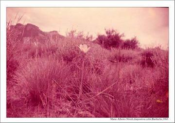 20071001154118-bariloche-1965-diapositiva-color.jpg